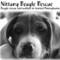 Nittany Beagle Rescue